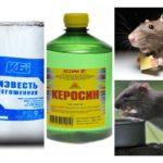 Fonds de rats et de souris