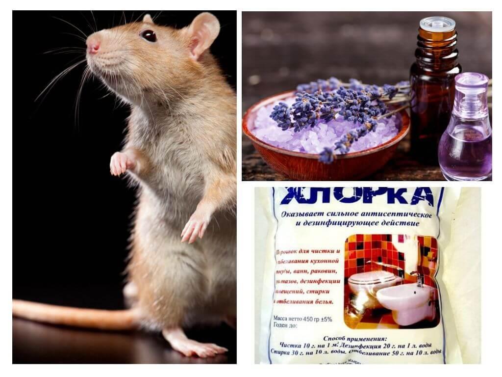 Huiles Essentielles Contre Les Souris de quoi les rats et les souris ont-ils peur?