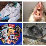 Poison de rat
