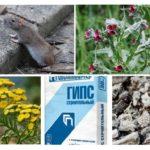 Remèdes populaires pour rats