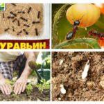 Utilisation d'insecticide