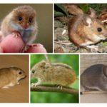 Types de souris