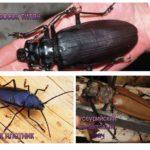 Types de coléoptères