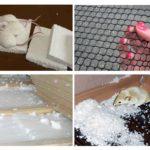 Protège la mousse des souris