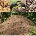 Logement des insectes