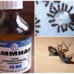 Ammoniac de fourmis