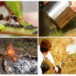 Lutte contre les fourmis