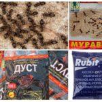 Produits chimiques fourmi