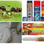 Moyens de combattre les fourmis