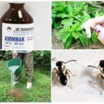 L'utilisation d'ammoniac dans le jardin