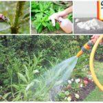 Méthodes de contrôle des insectes