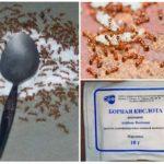 Acide borique de fourmis