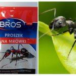 Signifie jeter les fourmis
