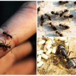 Habitat de fourmis