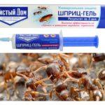 Maison de fourmi pure