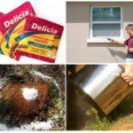 Applications de la poudre Delicia
