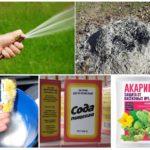 Différentes façons de traiter les pucerons
