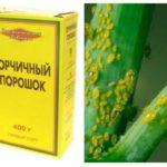 La moutarde dans la lutte contre les pucerons