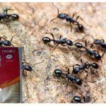 Thunder 2 des fourmis