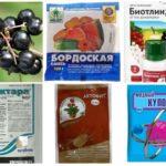 Produits chimiques pour lutter contre les pucerons