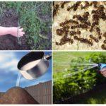 L'utilisation de vinaigre contre les fourmis