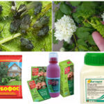Insecticides pour insectes nuisibles