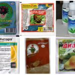 Médicaments efficaces contre les pucerons