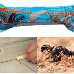 Pencil Masha pour combattre les fourmis