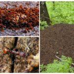 Fourmilière et fourmis