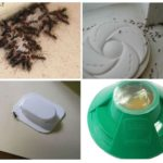 Pièges à insectes