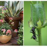 Fourmis dans un pot de fleur