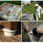 Fourmis dans le rucher