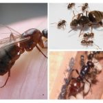 La composition des fourmis dans la colonie