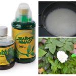 Usines de traitement avec du savon vert