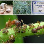 Les plantes dans la lutte contre les insectes