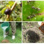 Recettes folkloriques de fourmis