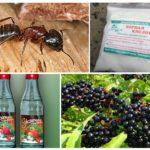 Remèdes populaires pour les fourmis dans le jardin