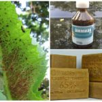 Une solution d'ammoniac d'insectes nuisibles