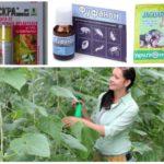Produits chimiques de pucerons