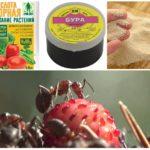 Appâts toxiques pour les fourmis