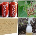 Application de pucerons Coca-Cola
