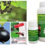 Produits de fourmi professionnels