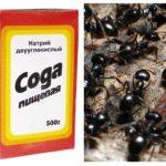 Des fourmis à la soude