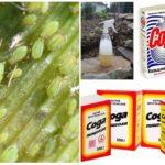 Bicarbonate de soude et bicarbonate de soude