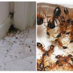 Dommages causés par les insectes