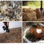 Méthodes de contrôle des fourmis