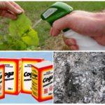 Solutions de cendres et de soude de pucerons