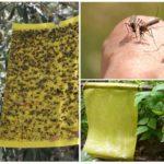 Pièges à insectes collants