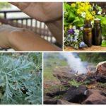 Les huiles essentielles, l'absinthe et l'épinette rougeoyante sont capables de se débarrasser des moustiques