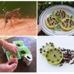 Citron et clous de girofle pour se protéger des insectes volants